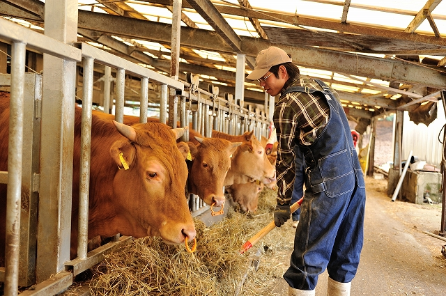 あか牛のイメージ
